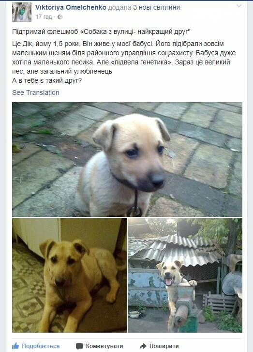 """У Костянтинівці оголошено флешмоб """"Собака з вулиці - найкращий друг"""", фото-1"""
