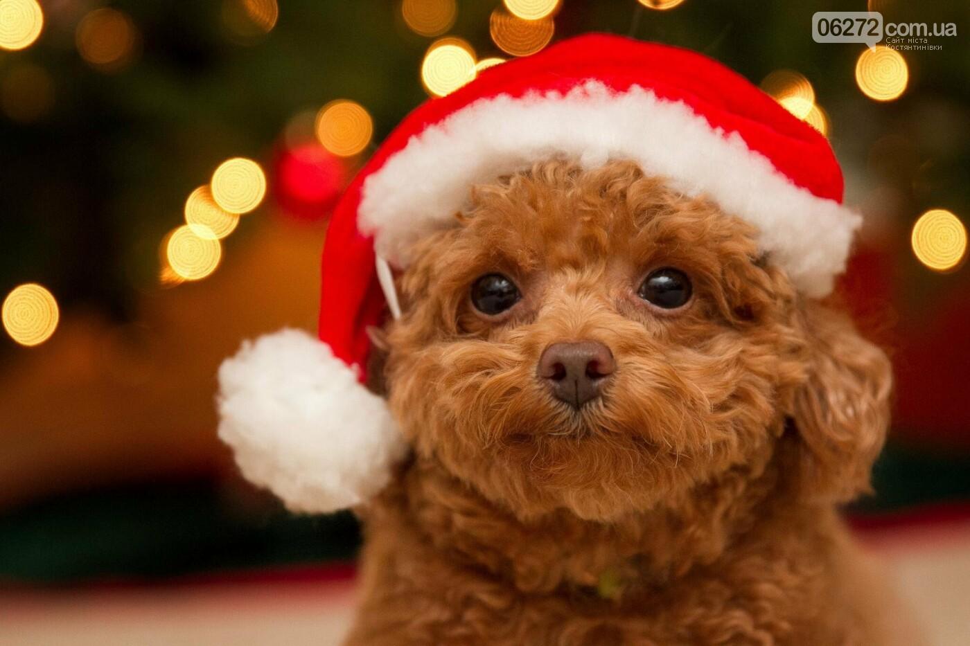 Что ждет людей в год Собаки. Советы астрологов, фото-4