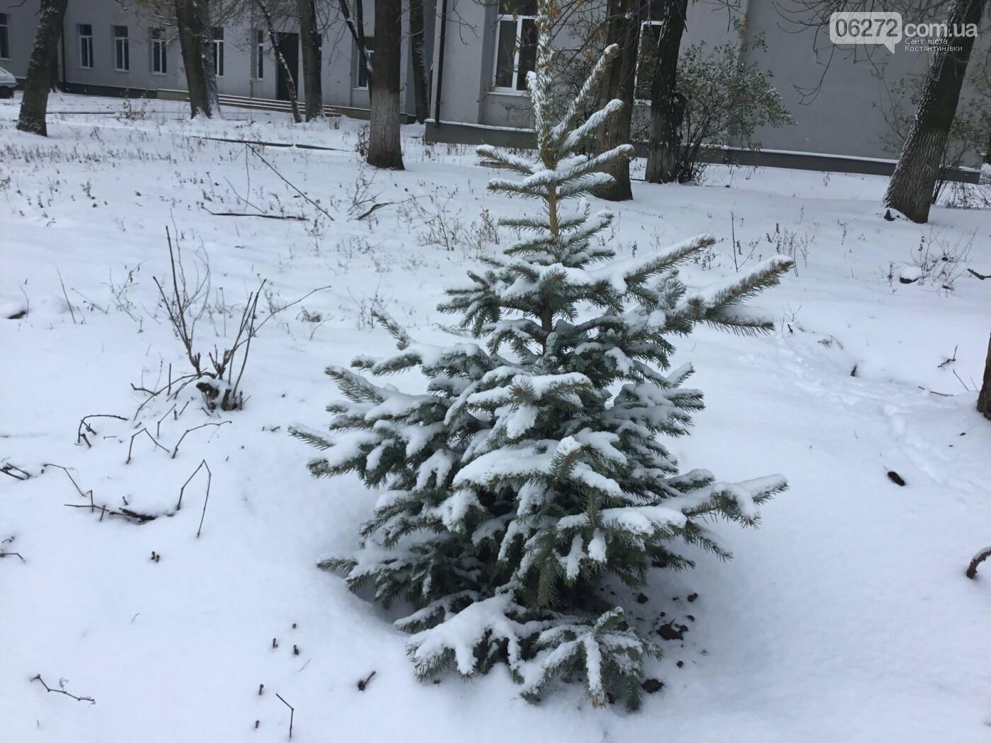 У Костянтинівці висади молоді ялинки (фотофакт), фото-2