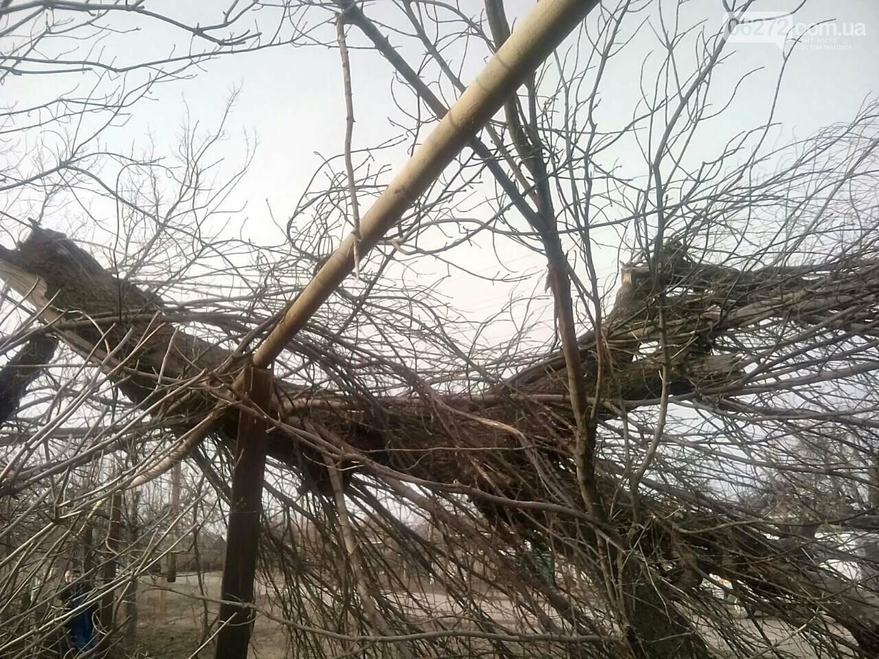 В Константиновском районе дерево упало на столб линии электропередач, фото-2