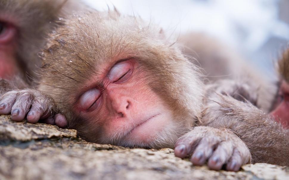 Мир снов. Почему вредно много спать, фото-1
