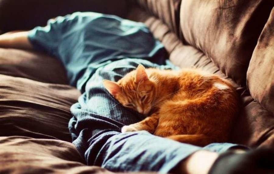 Мир снов. Почему вредно много спать, фото-2
