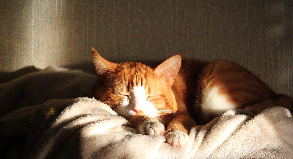Мир снов. 8 советов для здорового сна, фото-3