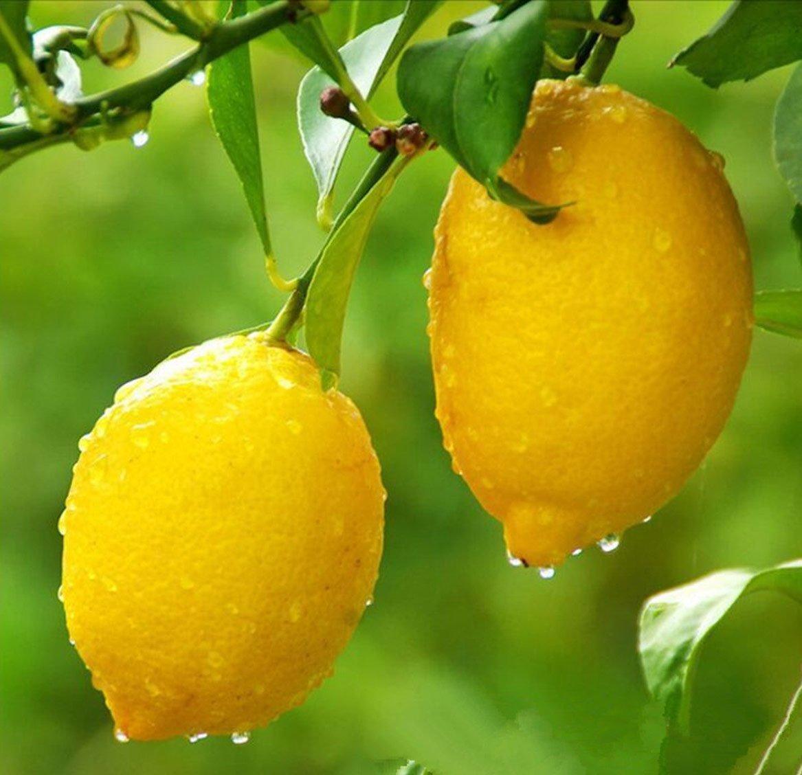 Польза или вред? Лимон, фото-2