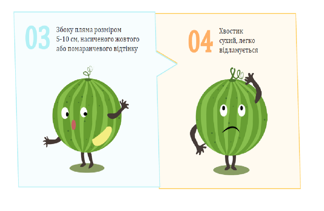 Как на прилавках  Константиновки правильно выбрать арбуз, фото-3