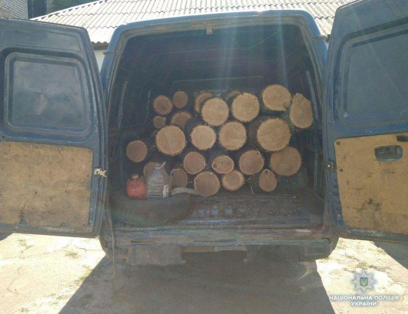 За вырубку леса мужчина из Константиновки может сесть в тюрьму на 3 года, фото-1