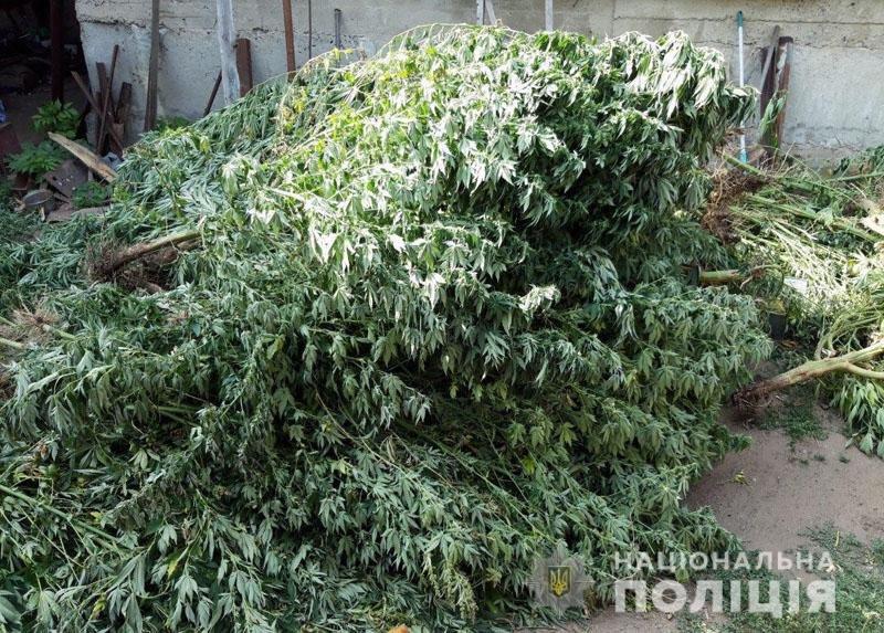 У Костянтинівці ліквідували 2-метрову плантацію конопель, фото-2