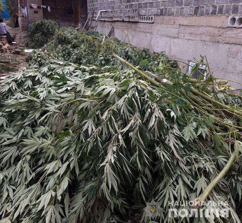 В Донецкой области ликвидировали полтора миллиона кустов конопли, фото-3