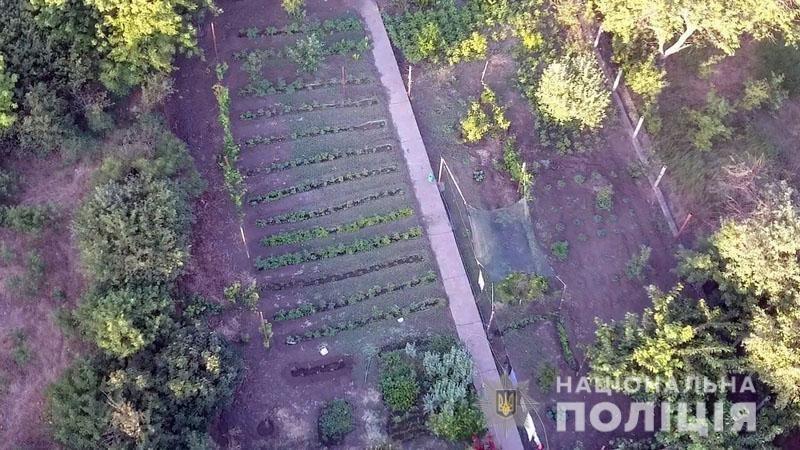 В Донецкой области ликвидировали полтора миллиона кустов конопли, фото-1