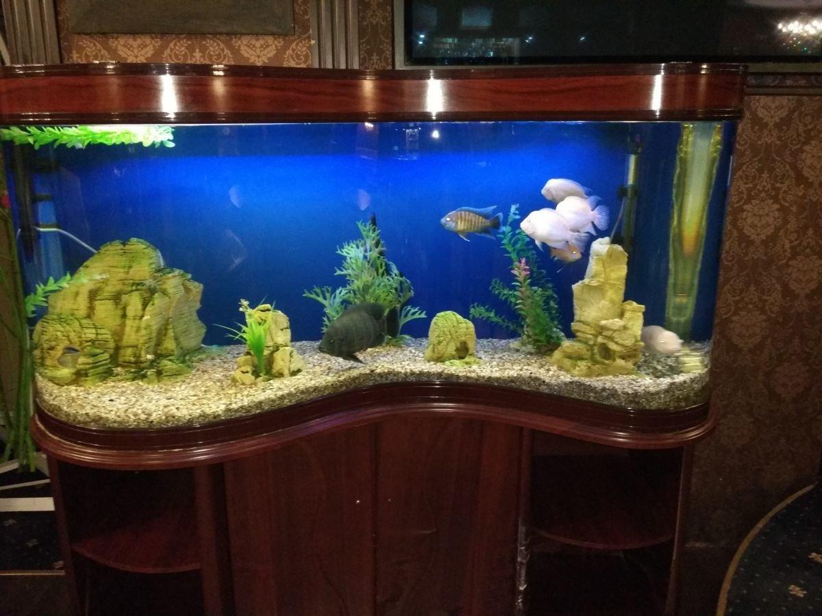 4 причины завести дома аквариумных рыбок, фото-1