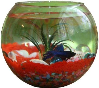 4 причины завести дома аквариумных рыбок, фото-2
