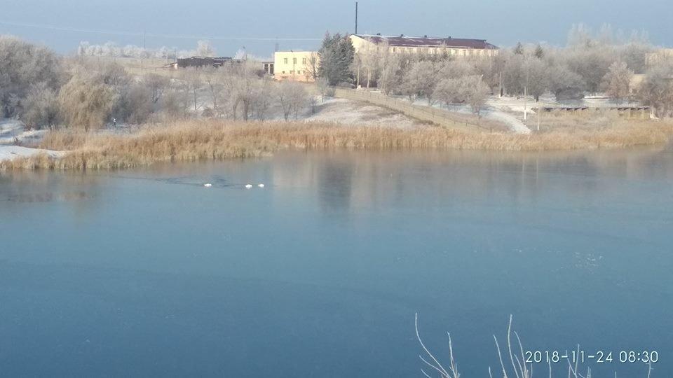 Константиновка. Лебеди не бросили своего ребёнка, хотя могли погибнуть вместе с ним, фото-4