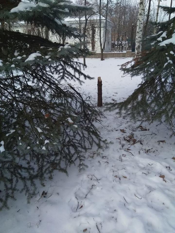 "В Константиновском парке ""Металлург"" вандалы спилили елку (фотофакт), фото-3"