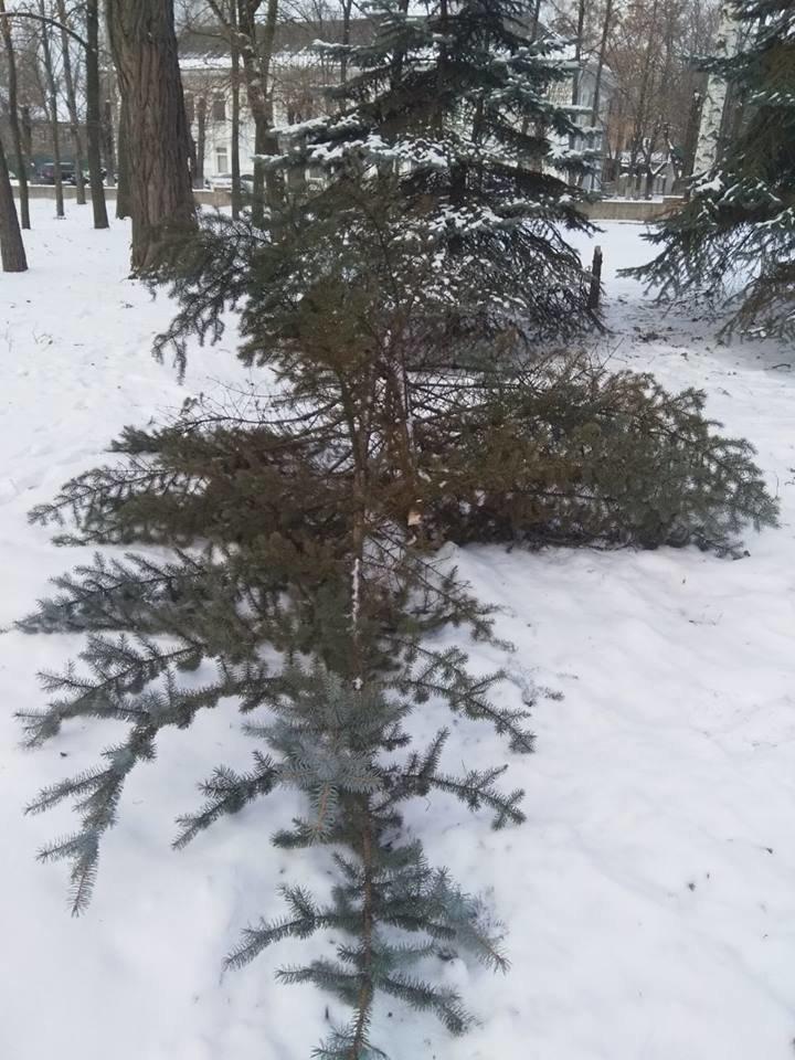 "В Константиновском парке ""Металлург"" вандалы спилили елку (фотофакт), фото-1"