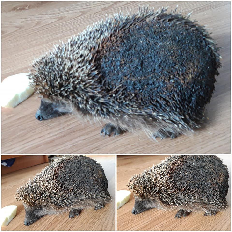 Жертвами пожаров в экосистеме становятся спящие животные. Почему нельзя палить сухую траву, фото-1