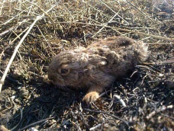 Жертвами пожаров в экосистеме становятся спящие животные. Почему нельзя палить сухую траву, фото-4