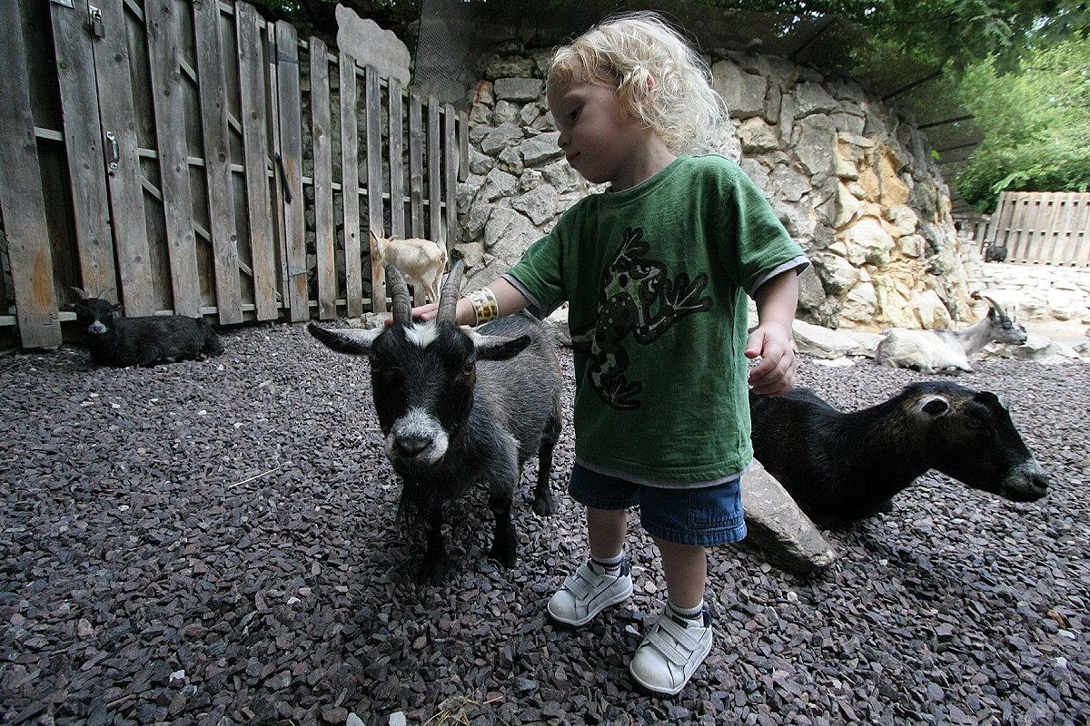 Чим небезпечні контактні зоопарки - Уляна Супрун, фото-2