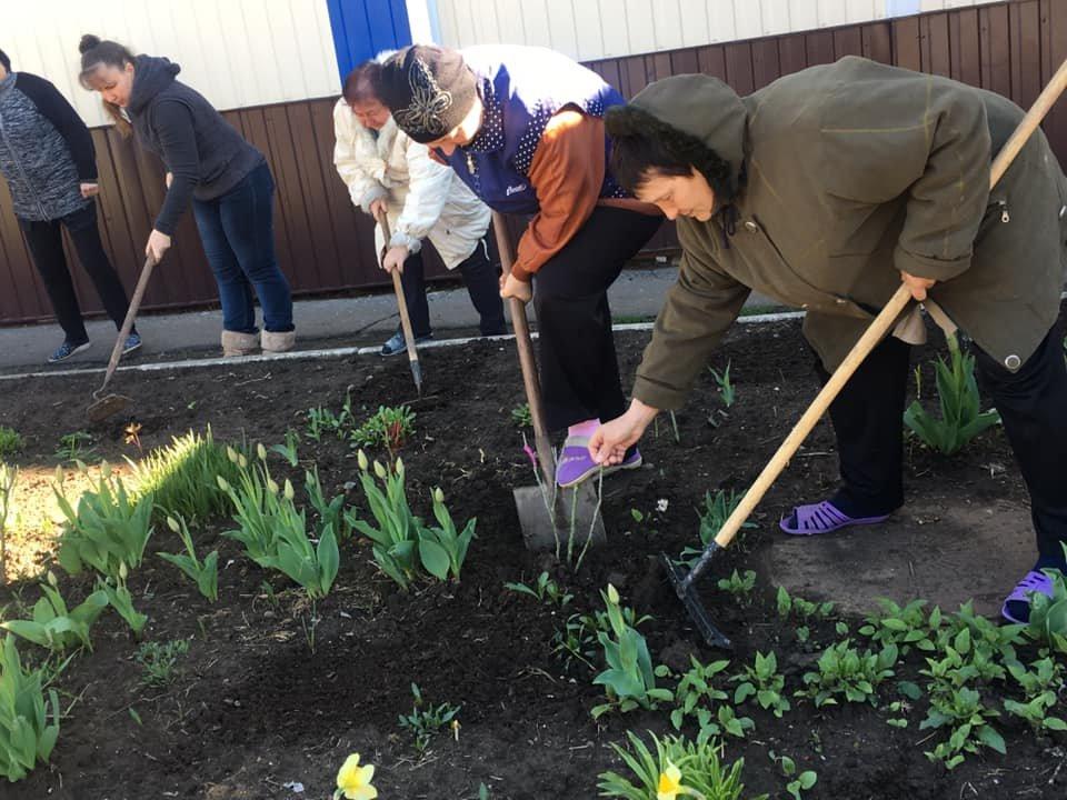 Возле городской библиотеки и школы №6 высадили розы, фото-1