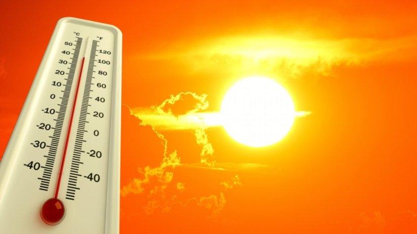 Дружковский врач рассказал о профилактике и симптомах теплового и солнечного ударов, фото-1