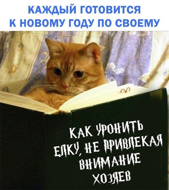 Без кота и жизнь не та. Подборка смешных картинок с котиками, фото-10