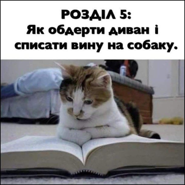 Без кота и жизнь не та. Подборка смешных картинок с котиками, фото-14