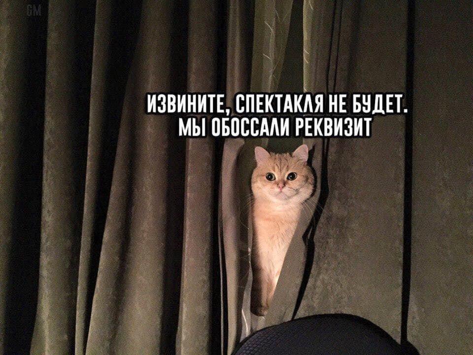 Без кота и жизнь не та. Подборка смешных картинок с котиками, фото-7