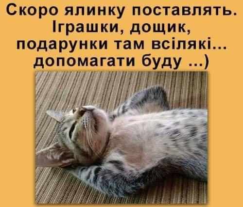 Без кота и жизнь не та. Подборка смешных картинок с котиками, фото-2