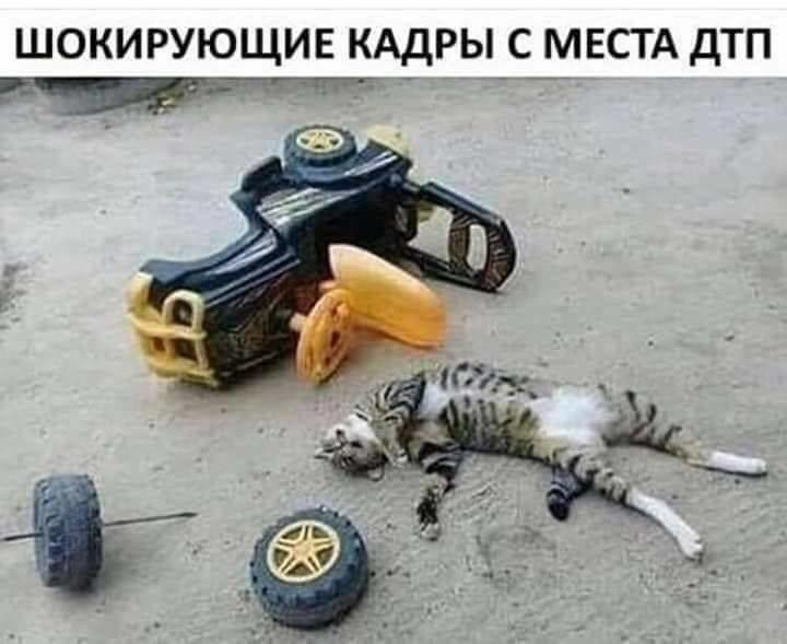 Без кота и жизнь не та. Подборка смешных картинок с котиками, фото-3