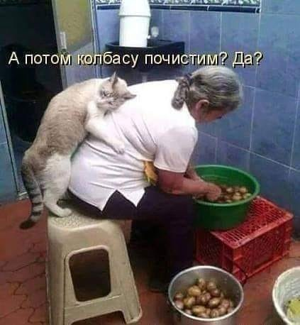 Без кота и жизнь не та. Подборка смешных картинок с котиками, фото-5