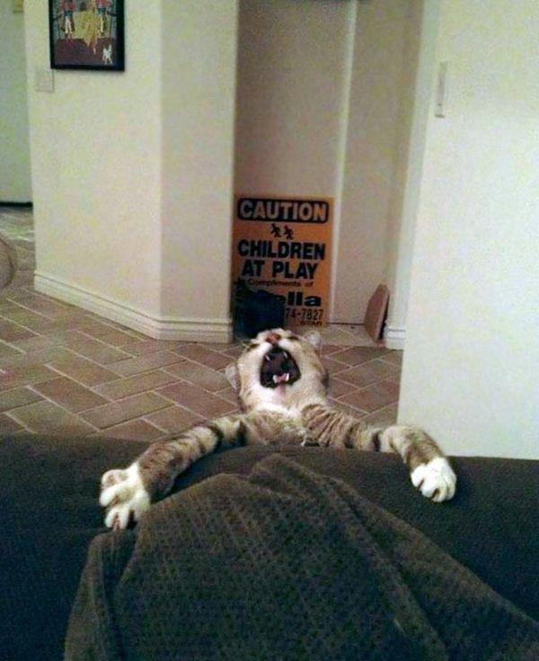 Без кота и жизнь не та. Подборка смешных картинок с котиками, фото-13