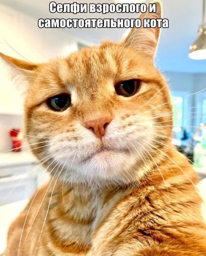 Без кота и жизнь не та. Подборка смешных картинок с котиками, фото-19