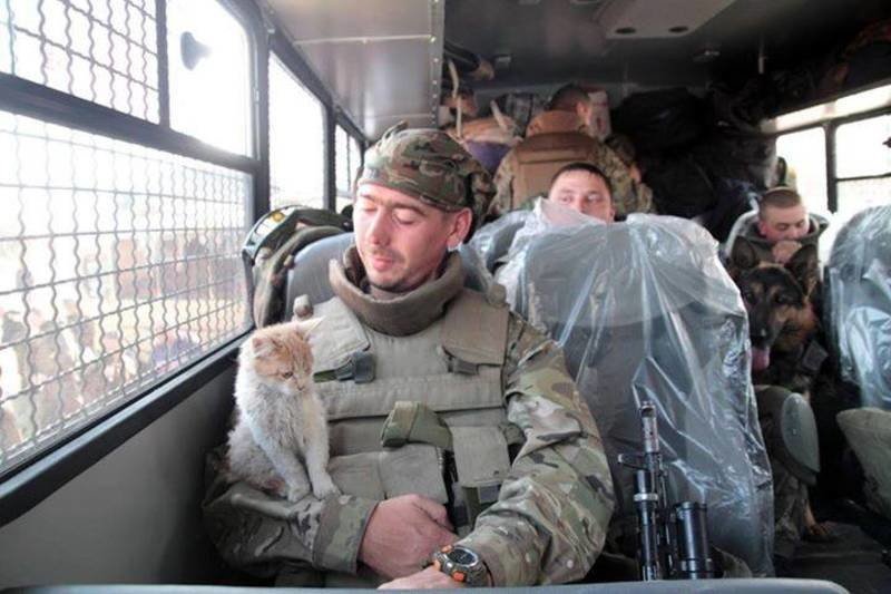 Військові та їх чотирьохлапі друзі. Котики ЗСУ і не тільки, фото-9
