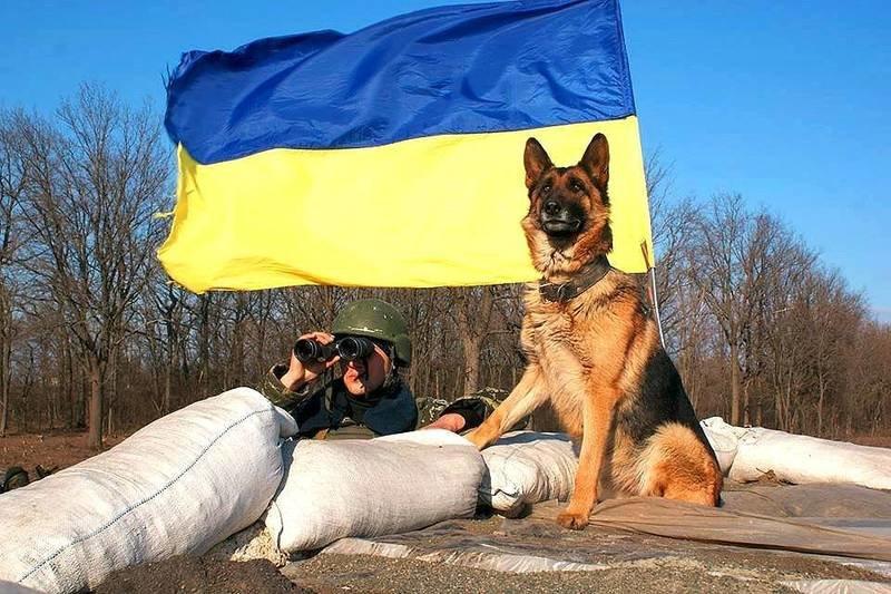 Військові та їх чотирьохлапі друзі. Котики ЗСУ і не тільки, фото-8