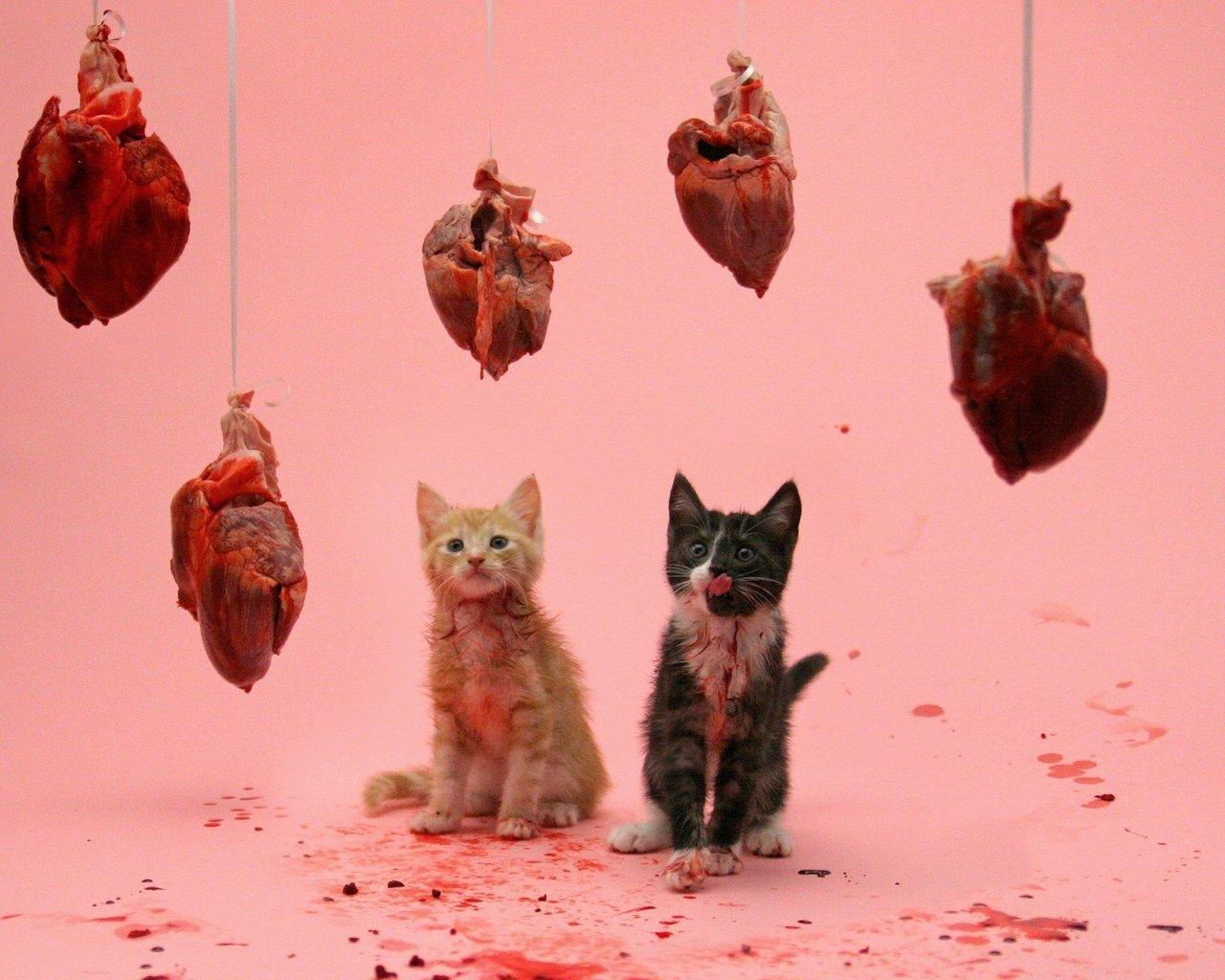 Сердечка з ковбаси і кохання. Смішні картинки про 14 лютого, фото-8