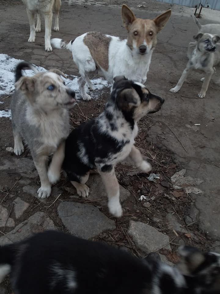Метод стерилізації тварин по-костянтинівськи, фото-1