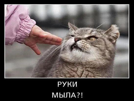 Пандемія чи привід для жартів: підбірка смішних картинок та мемів про коронавірус, фото-4